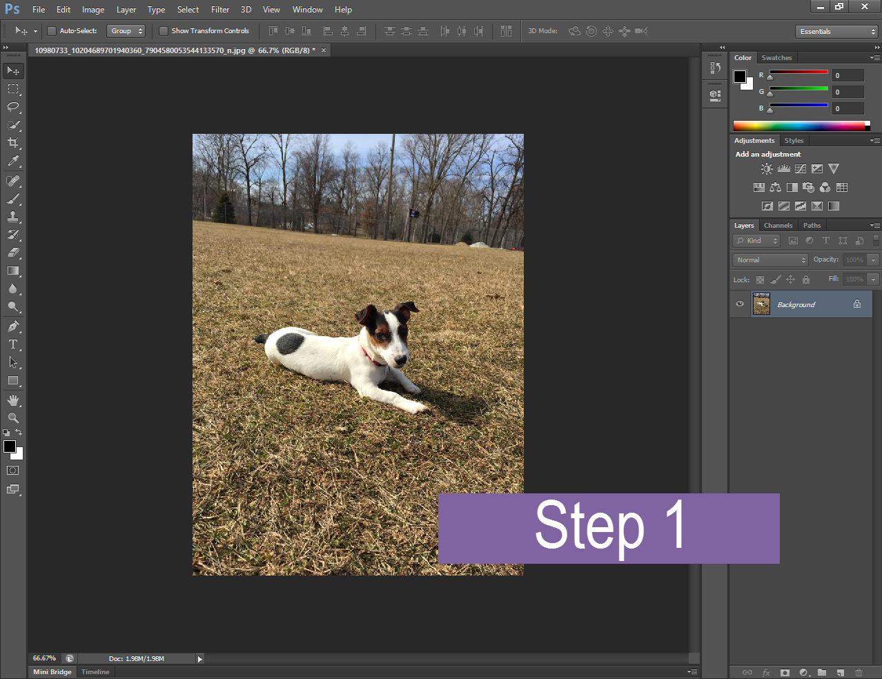 a screenshot of a puppy image that is open in Photoshop